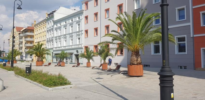 Co sądzicie o palmach na Piastowskiej?