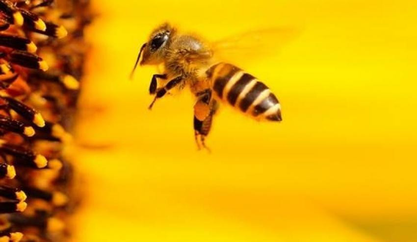 Zawodowi pszczelarze zaprezentują się w Prudniku