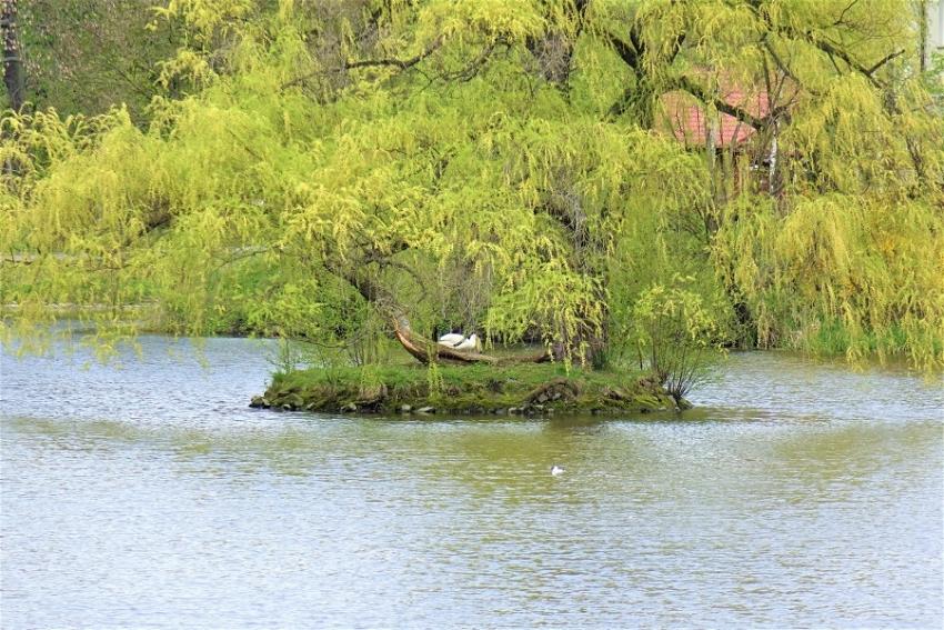 Gmina Nysa otrzymała dofinansowanie na rewitalizację parku